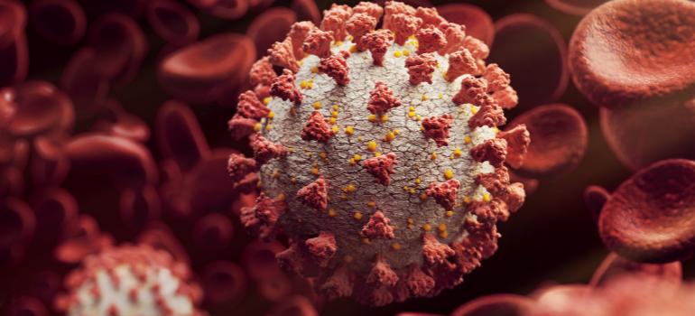 Coronavírus e doenças cardiovasculares