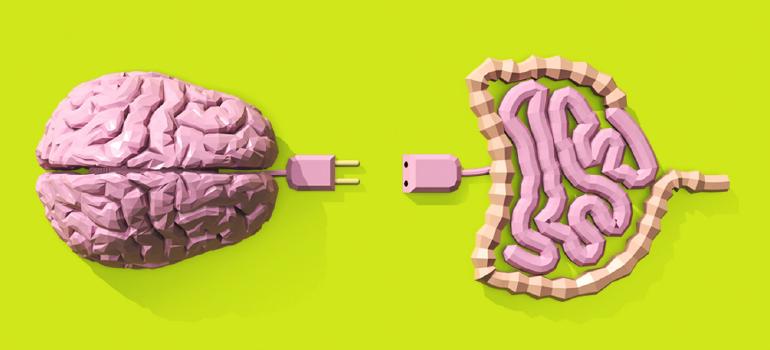 Um breve resumo sobre a conexão cérebro- intestino